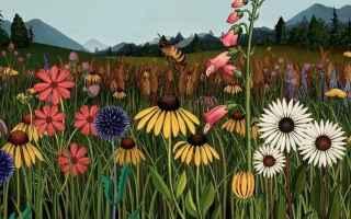 illustrazione  video  fiori  giappone