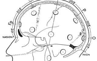 Neuropsicologia: eeg cervello corteccia neurologia