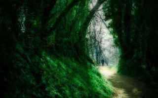Neuropsicologia: interpretazione sogni sognare perdersi