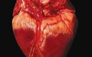 Alimentazione: american heart association olio di cocco