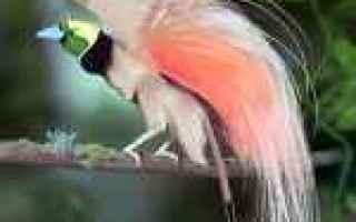Animali: specie di uccelli  isole  madagascar