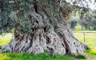 Ambiente: albero  adonis  longevo  antico