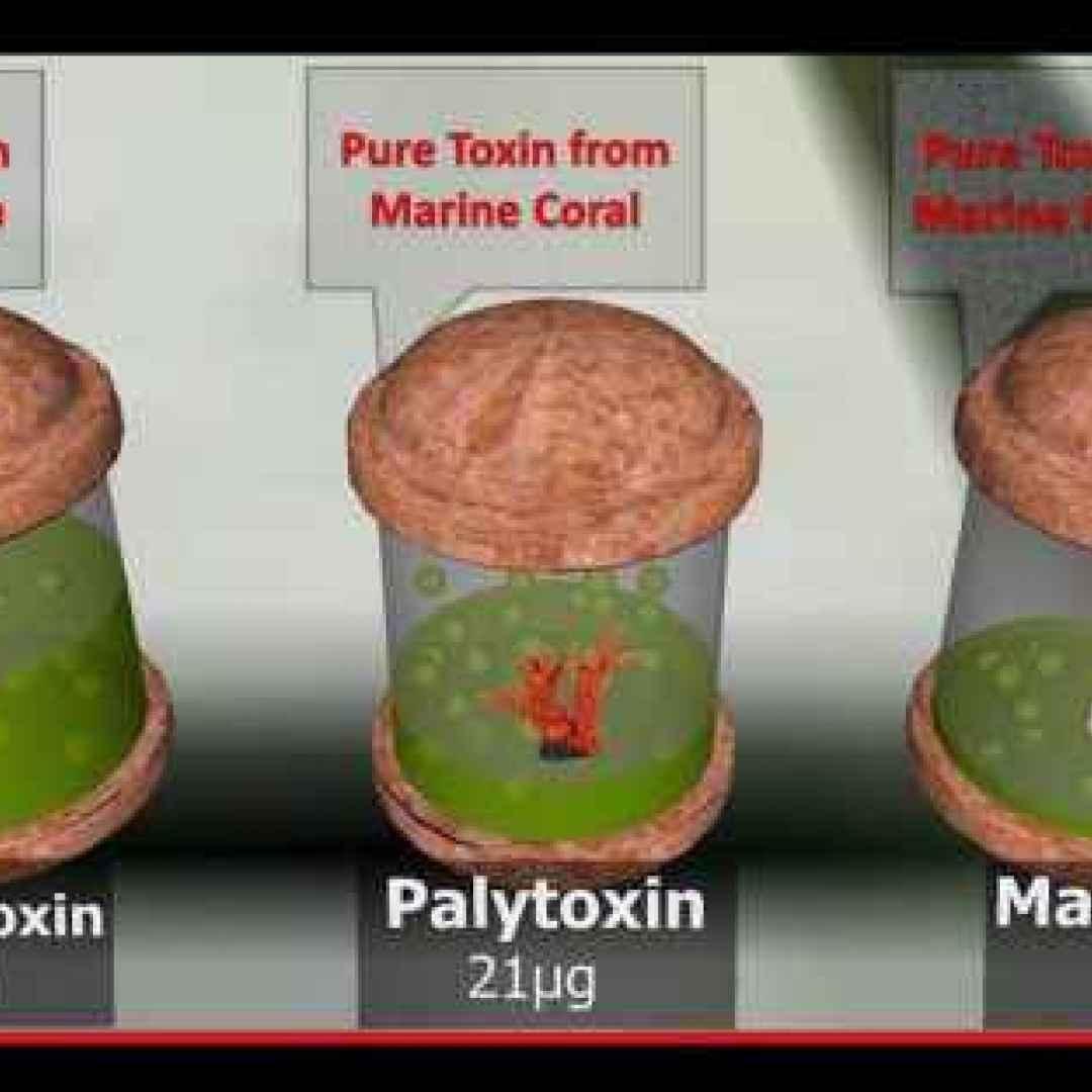 scienza  chimica  classifiche  veleni