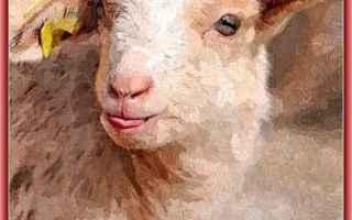 Cultura: agnello  elaborazione grafica  innocenza