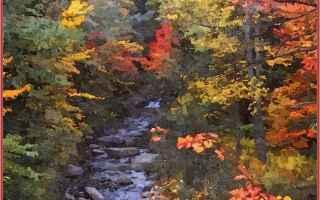 Ambiente: acqua  clorofilla  colore   antocianine