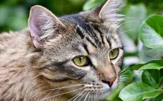 gatto  vomito  intolleranza