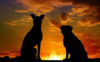 animali  bestie  umani  fedeltà