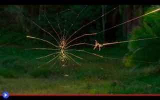 Animali: ragni  aracnidi  ragnatele  madagascar