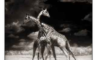 Foto: bianco e nero  fotografia  animali
