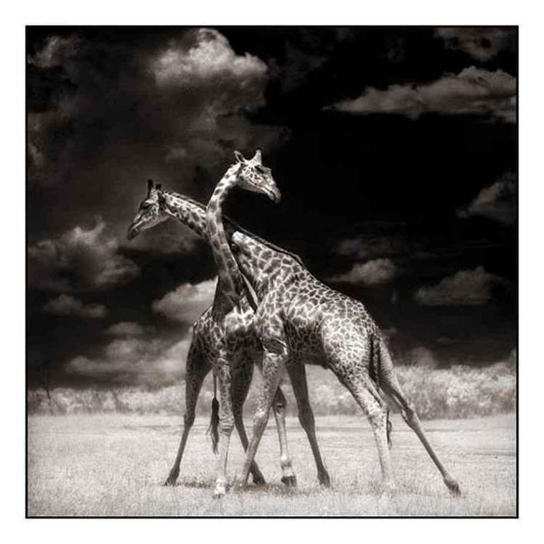Fotoalbum - Gli animali in alcune foto di Nick Btandt