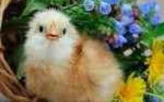 Foto: animali  desktop  dostoevskij  foto