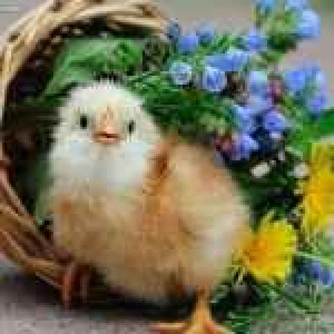 Sfondi per desktop fauna ris 1366x768 animali for Sfondi desktop animali