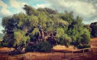 Ambiente: ambiente  alberi  foreste  turismo  news