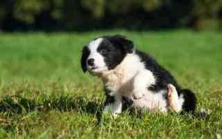 Animali: cane  alimenti cani  allergia