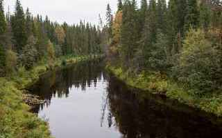 La Grande Foresta del Nord è il secondo più grande ecosistema terrestre al mondo – dopo le fores