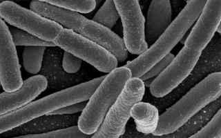 Una nuova scoperta nello studio del microbiota, l'insieme di microorganismi (alcuni miliardi, in p