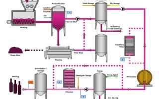 Gastronomia: vino  vinificazione  processo  scienza