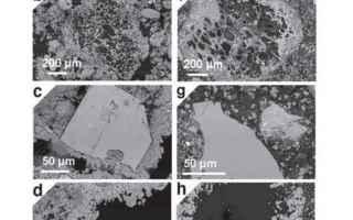 Scienze: mare  muri romani  plinio il vecchio