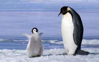 ambiente  animali  clima  antartide