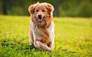 Animali: cani  cane  salute  dermatite