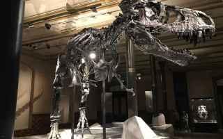 Tyrannosaurus è un genere di dinosauro teropode vissuto nel Cretaceo superiore, circa 68-66 milioni