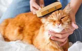 gatto  peli  peli morti  spazzolatura
