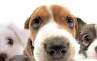 Animali: cane  amico  fedele  felicità