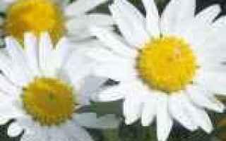Foto: 1920x1080  fiori  sfondi per desktop
