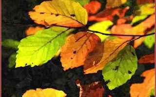 pincopallo  autunno  estate  foglie