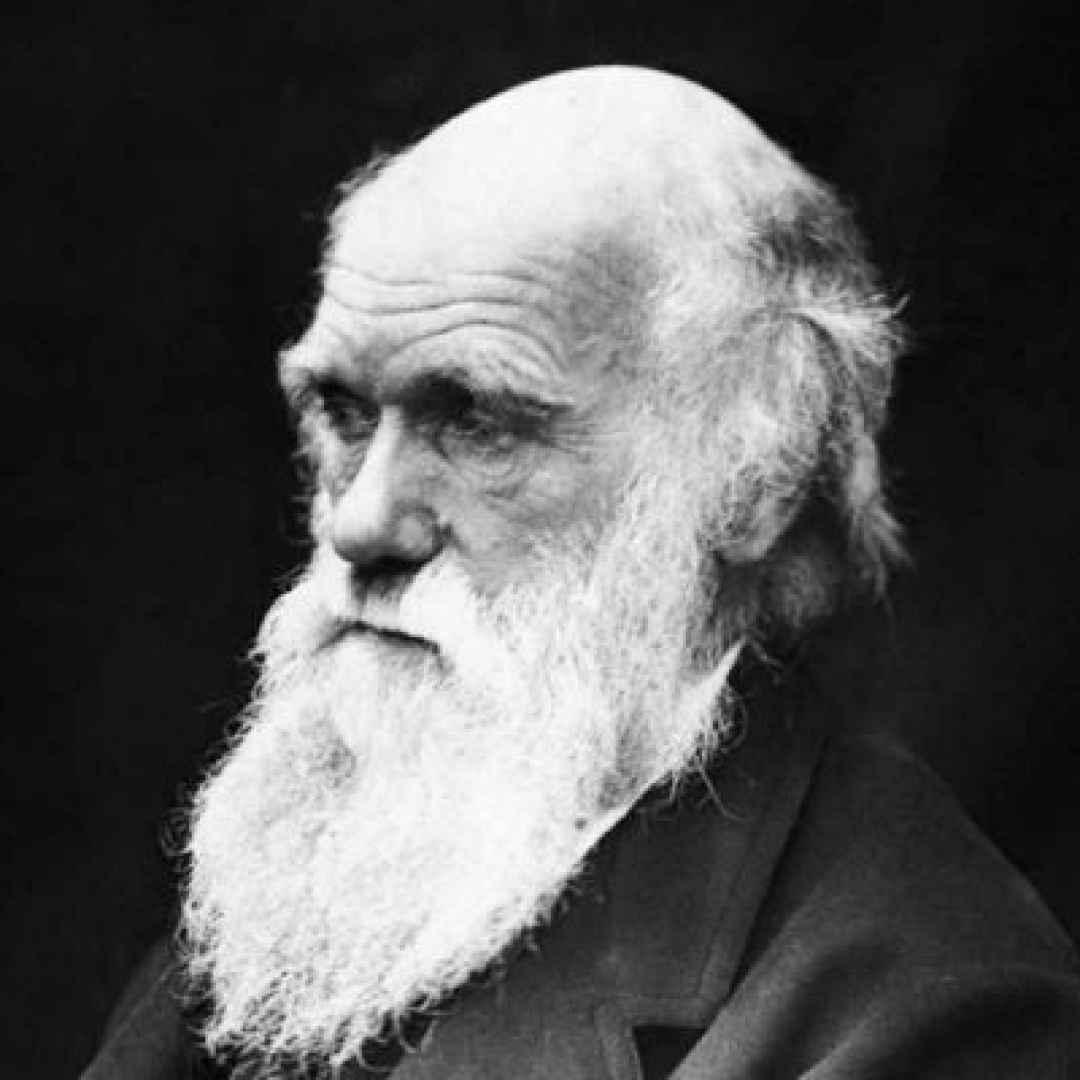 darwin  scienza  donne