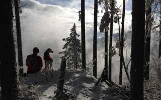 Animali: cani  abbandono  fedeltà  uomo