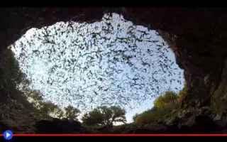 animali  pipistrelli  texas  caverne