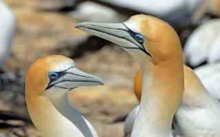 Animali: sule  portovenere  liguria  natura