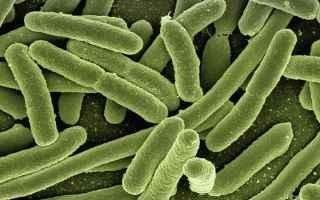 Si fa presto a dire microbioma. Sotto un nome che ci ricorda chiaramente che stiamo parlando di cose