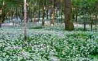 Foto: desktop  flora  immagini  1366x768