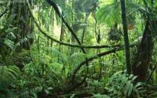 Foto: desktop  flora  foto  1920x1080