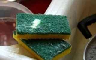 spugnette da cucina  batteri  spunetta  spugna