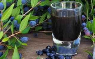 Ricette: ricette  borghi  liquore  parma  piacenz