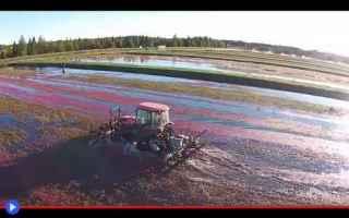 Ambiente: tecnologia  agricoltura  frutti  cibo
