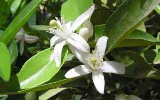 fiori  foto  frutti  impollinazione