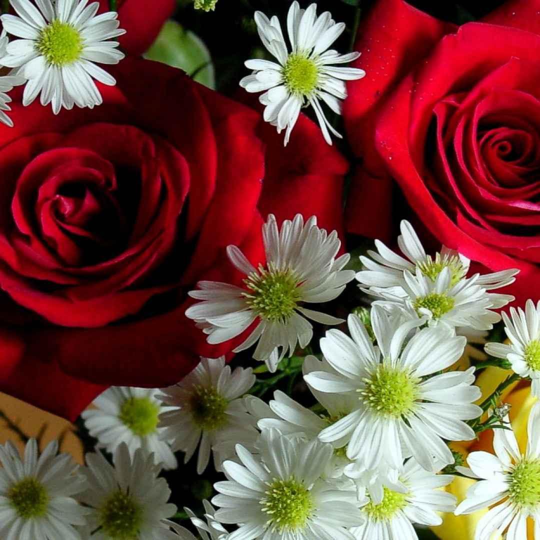 fiori  natura  caldo  ambiente