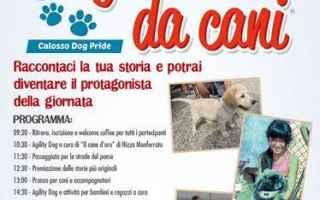 vai all'articolo completo su cani
