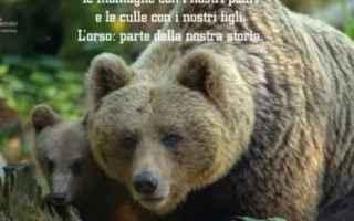 trentino  orsa  attualità  governo