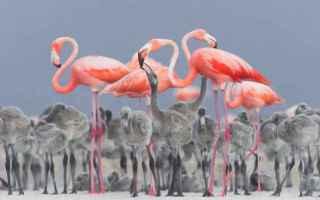Mostre e Concorsi: concorso  fotografia  uccelli  natura