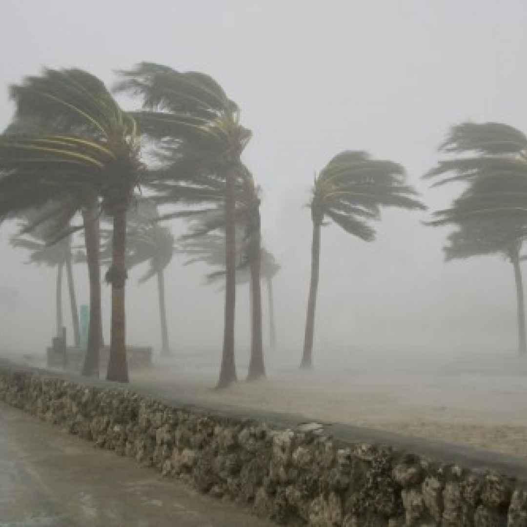 palme  uragani  radici  venti