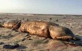 dal Mondo: texas  uragano harvey  creatura