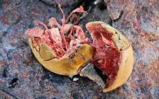 Alimentazione: integratori  microbiota  baobab  hadza
