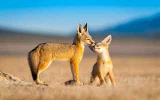 Foto online: fotografia  animali  wildlife  natura