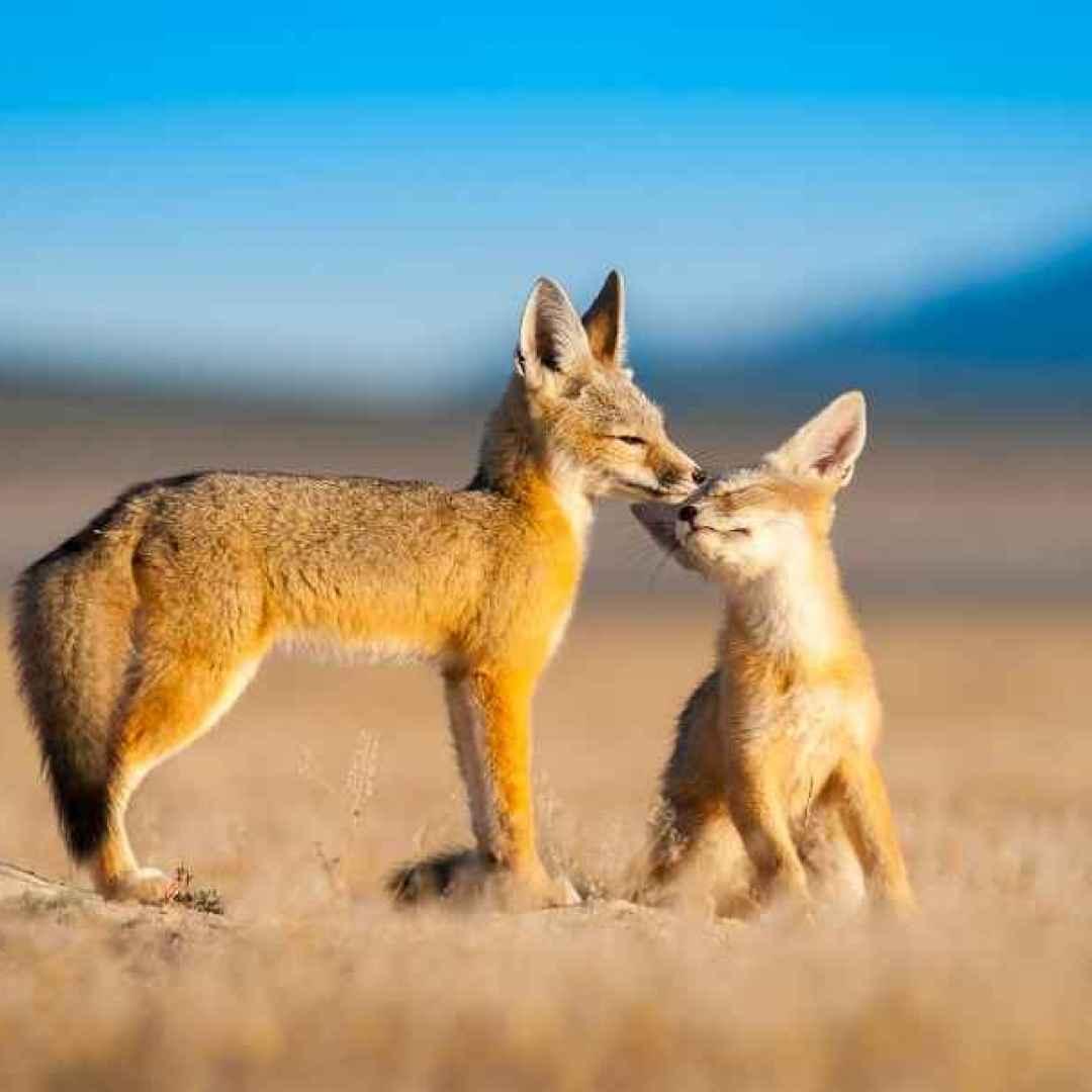 fotografia  animali  wildlife  natura