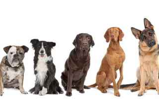 Animali: cani  cane  pets  dog  dogs  quiz